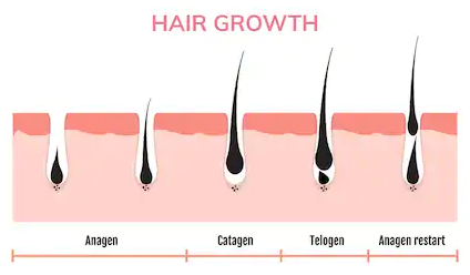 Growth Cycles waxing